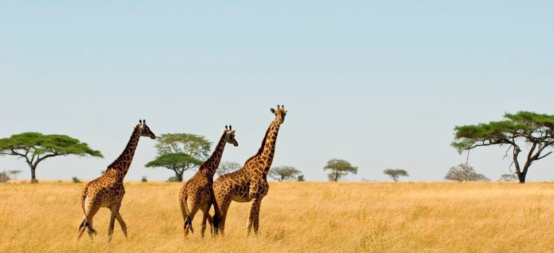 The_classic_tours_and_safaris_6